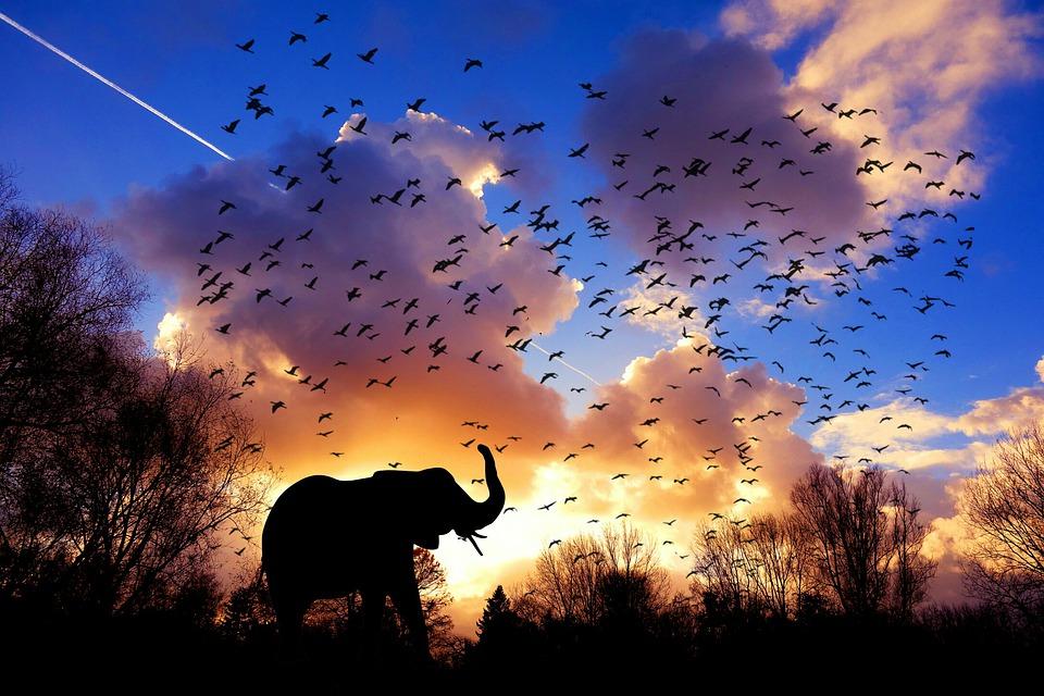 elephant-3117217_960_720